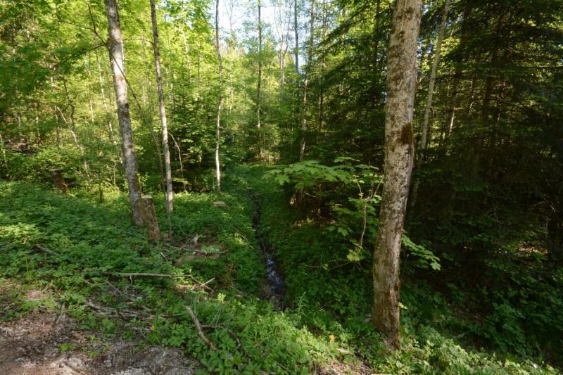 La forêt de Bouleyres