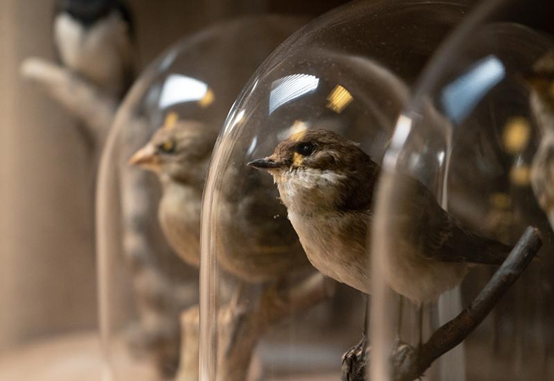 Leihdienst - Vögel