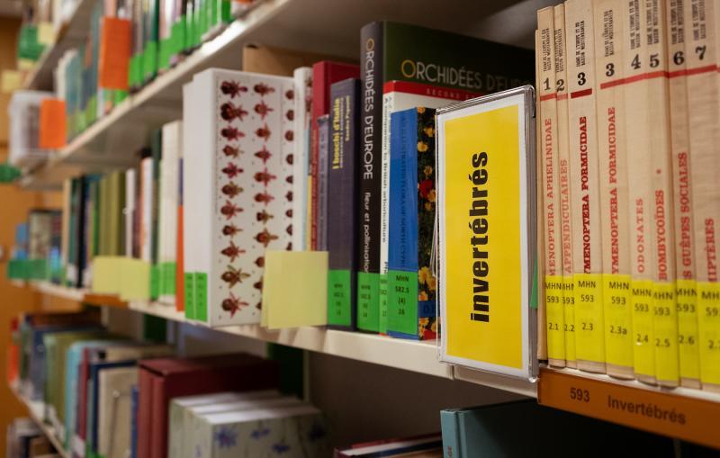 Bibliothèque MHNF
