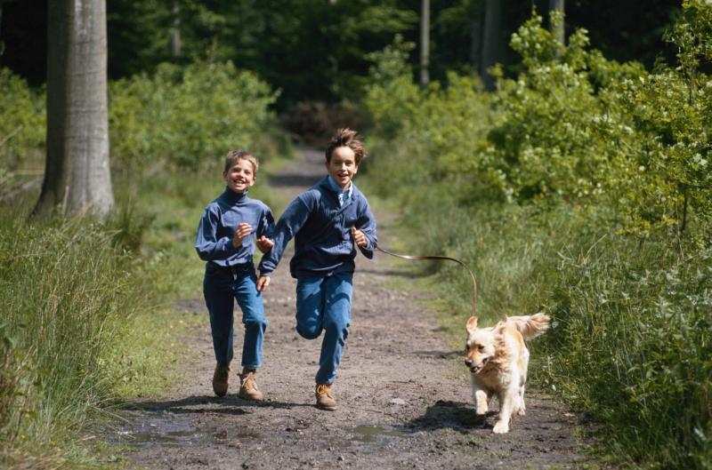 Avec un chien en forêt