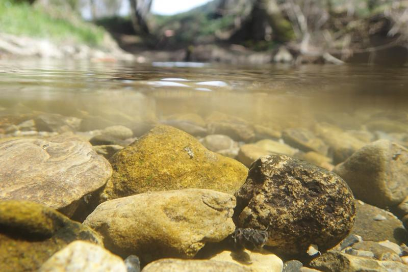 Ruisseau affermé : La Mionne