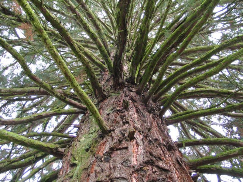 Spektakulärer Baum