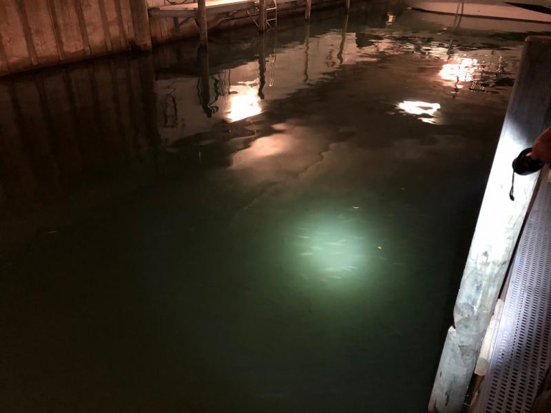 Rätselhafte Fischansammlung im überdachten Hafen in Sugiez