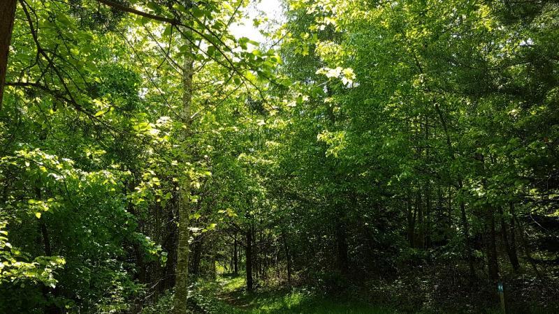 Une chenaie dans la forêt cantonale de Belfaux