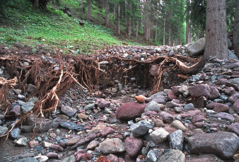 Forêt protectrice contre les processus torrentiels