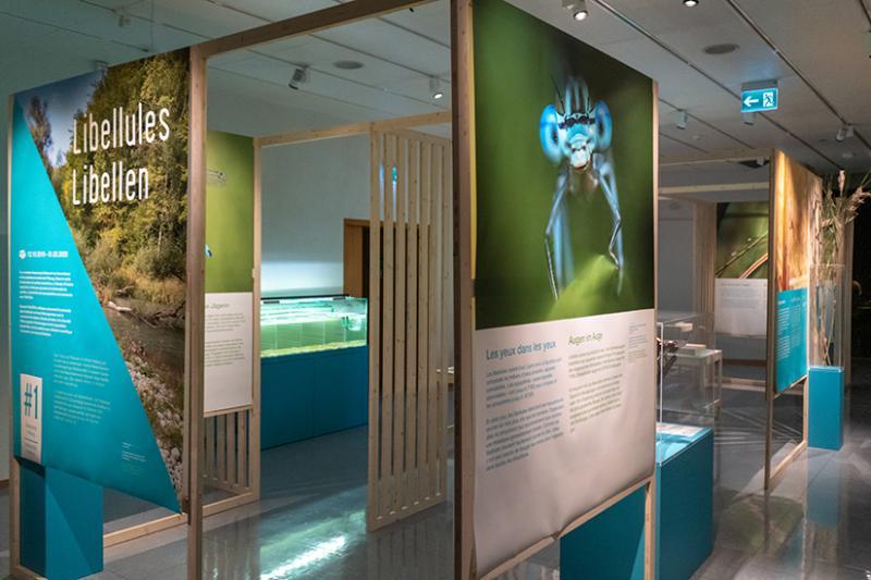 Exposition Libellules - #1 Biodiversité Fribourg au MHNF