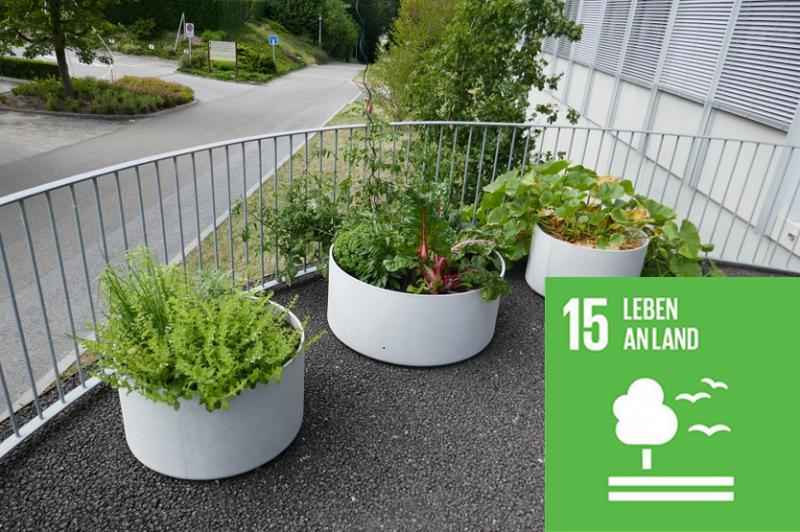 Städtische Grünflächen mit Pflanzen