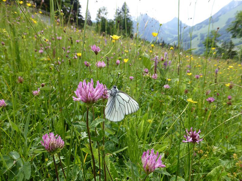 Biodiversité dans le canton de Fribourg