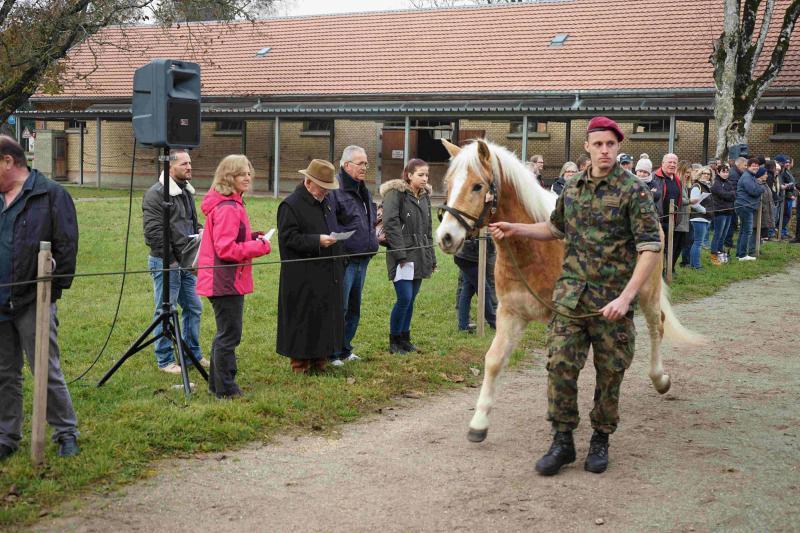 Cheval haflinger tenu par un militaire de l'Armée suisse
