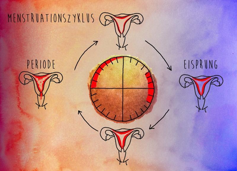 Menstruationzyklus