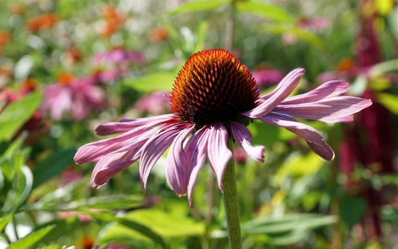 Dans Bild zeigt eine Fleur