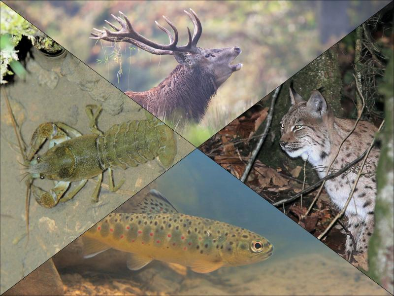 Section faune chasse et pêche © Tous droits réservés